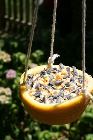 Orange Cup Bird Feeder