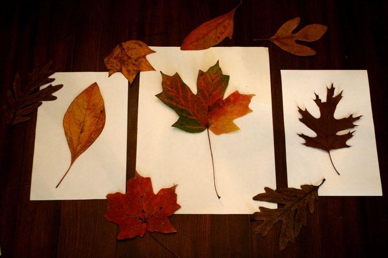 Leaf Burst Painting