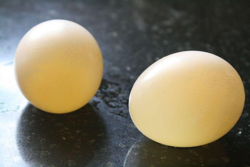 Egg Experiment2