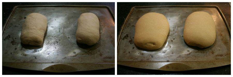 Beginner's Yeast Bread
