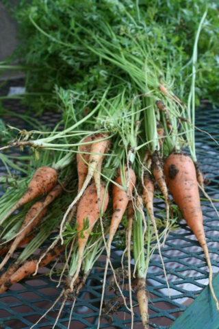 carrots - Off the Shelf