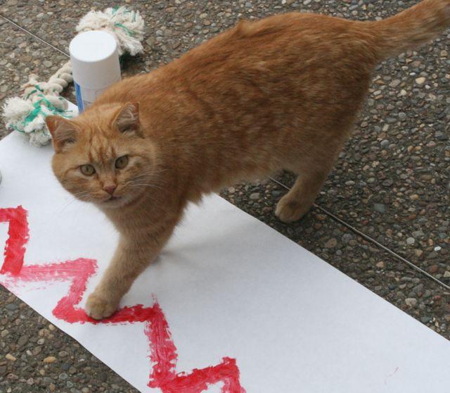 Walter the Art Cat