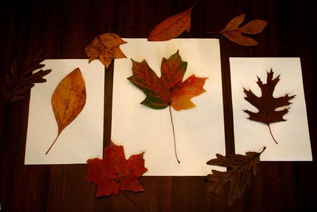 Leaf Burst Painting - Fletcher and the Falling Leaves - Off the Shelf