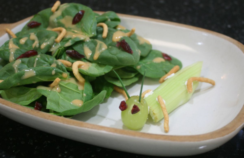 Bird's Bug Salad and Grasshoppers - Stellaluna - Off the Shelf